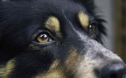 Hond mee naar Engeland? Doen! Check onze video en informatie over het hoe & wat.