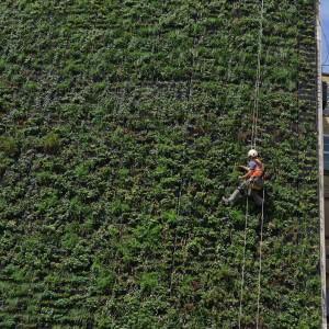 De Living Wall is meer dan 21 meter hoog en bevat meer dan 20 seizoensgebonden plantensoorten