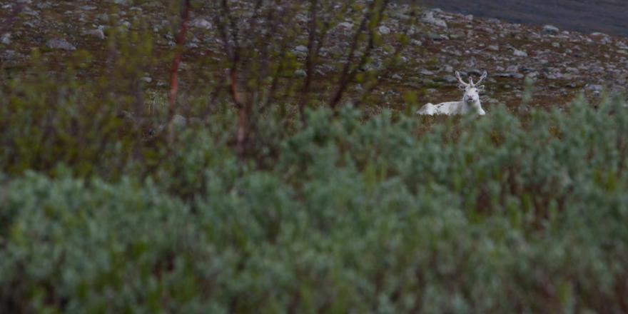beste-herfsttips-zweden-eland