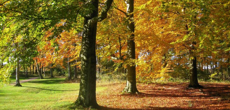 Bos in Zweden