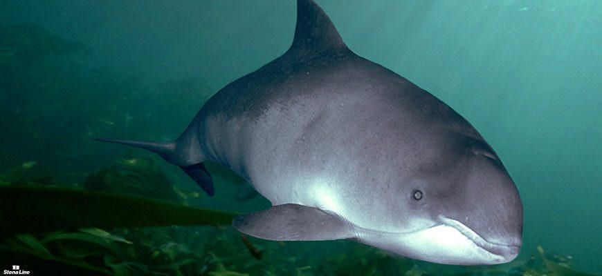 5 feiten die je nog niet wist over bruinvissen