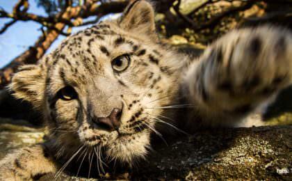 Nordens Ark dierenpark Zweden